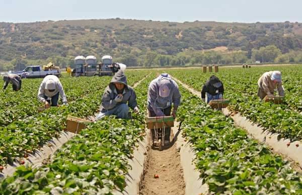 Farm Workers, Heat Stress, Heat Acclimatization
